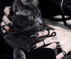 black, cat, and nails image