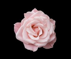 edit and rose image