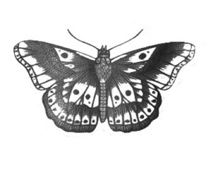 Harry Styles, one direction, and butterfly image