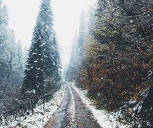 beauty, christmas, and cold image