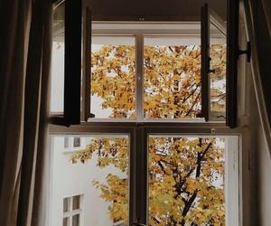 autumn, fall, and window image
