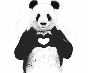 panda, love, and heart image