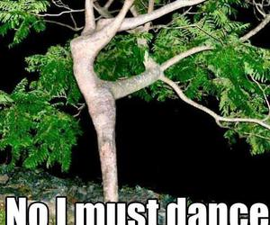 funny, lol, and tree image