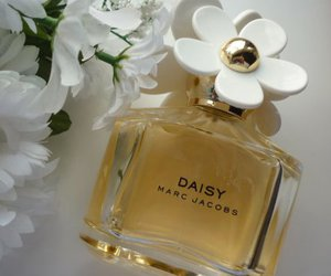 daisy, flowers, and fragrance image