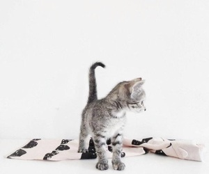 cat, cute, and simplicity image