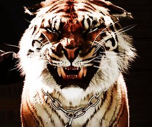 serie, shiva, and tiger image