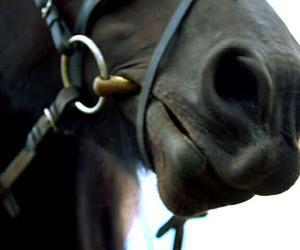 black, bridle, and black horse image