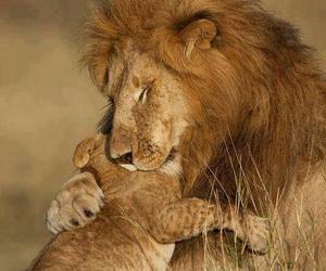 lions--animals cute image