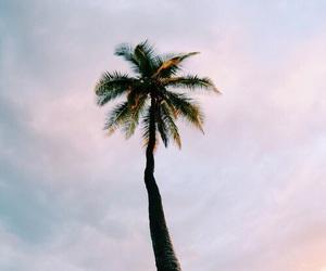 beach, salt, and summer image
