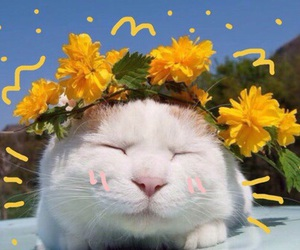 cat, yellow, and flowers image