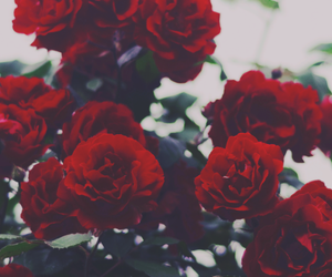 header, red, and indie image