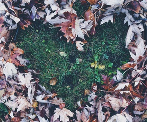 fall, goals, and heart image