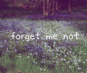 forgetmenot #love image