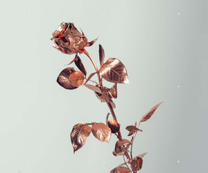 rose, gold, and flowers image