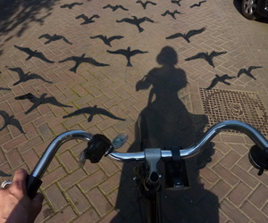 bird, bike, and photography image