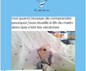 dormir, guinea pig, and humour image