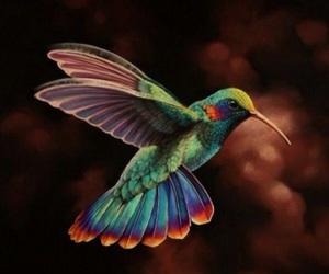 art, cool, and hummingbird image