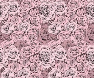rose, pink, and wallpaper image