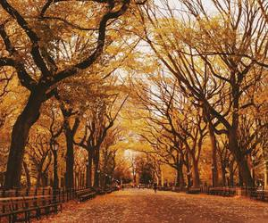 autumn, Central Park, and fall image