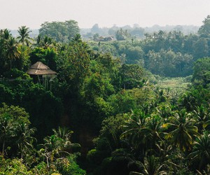 bali, landscape, and nature image