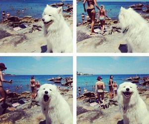 dog, funny, and beach image