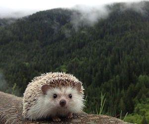 animal, hedgehog, and woods image