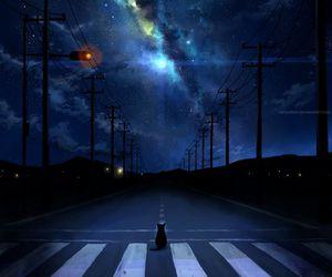 cat, night, and stars image