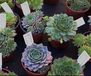 plants, succulents, and nature image
