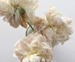 flowers, peonies, and photography image