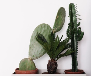 cactus, green, and home image
