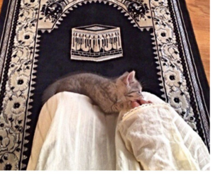 islam, cat, and hijab image