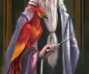 dumbledore, harry potter, and fumseck image