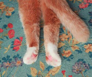 cat, paws, and fluffy image