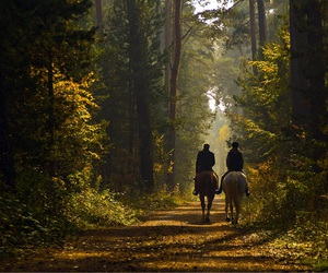 horse, forest, and nature image