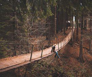 autumn, inspiration, and landscape image