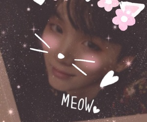 cat, kpop, and meow image