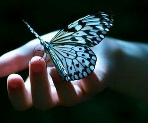 butterfly, blue, and hand image