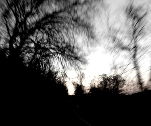 blurry, driving, and trees image