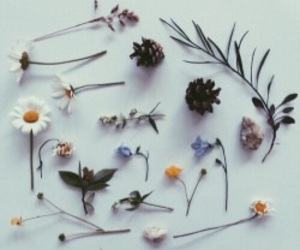 flowers, plants, and tumblr image