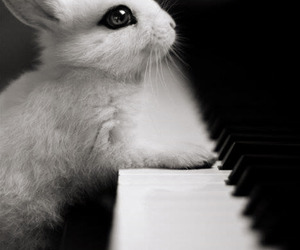 piano, cute, and rabbit image
