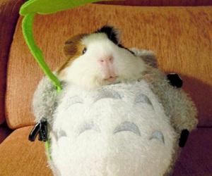 adorable, guinea pig, and studio ghibli image
