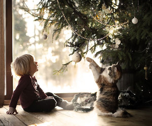 christmas, cat, and winter image