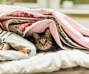 cat, cute, and cozy image