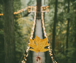 autumn, leaves, and light image