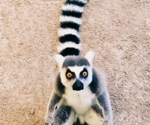 animals, crazy, and eyes image