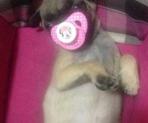 pug, dog lover, and baby image