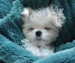 animal, lovely, and dog image