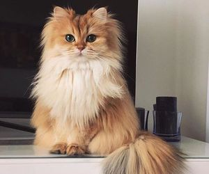 cats, bestmeow, and topcatphoto image