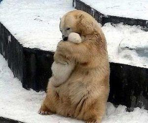 bear, bears, and cute image