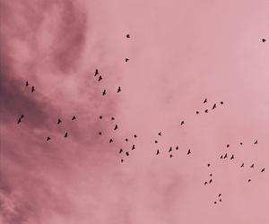 pink, bird, and sky image